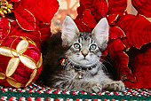 CAT 03 RK2523 06