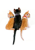 CAT 03 RK2525 16