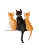 CAT 03 RK2526 04