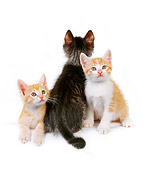 CAT 03 RK2527 01