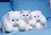 CAT 03 RK2689 01