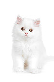 CAT 03 RK2690 01