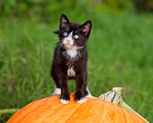 CAT 03 RK2693 01
