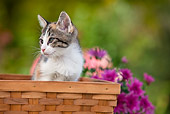 CAT 03 RK2696 01