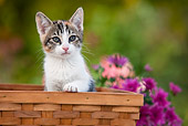 CAT 03 RK2697 01
