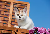 CAT 03 RK2698 01