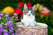 CAT 03 RK2699 01