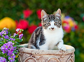 CAT 03 RK2700 01