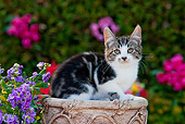CAT 03 RK2701 01