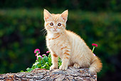 CAT 03 RK2702 01
