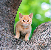 CAT 03 RK2703 01
