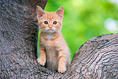 CAT 03 RK2704 01