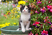 CAT 03 RK2706 01
