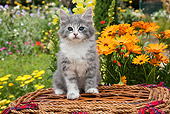 CAT 03 RK2708 01