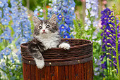 CAT 03 RK2709 01