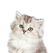 CAT 03 RK2712 01