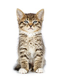 CAT 03 RK2719 01