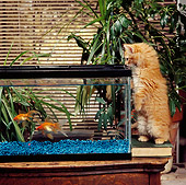 CAT 03 RS0143 01