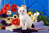 CAT 03 SJ0001 01