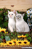CAT 03 SJ0004 01