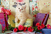 CAT 03 SJ0006 01