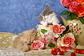 CAT 03 SJ0007 01