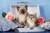 CAT 03 SJ0009 01