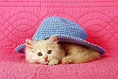 CAT 03 SJ0014 01