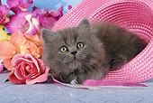 CAT 03 SJ0017 01