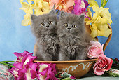 CAT 03 SJ0025 01