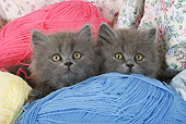 CAT 03 SJ0028 01