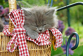 CAT 03 SJ0031 01