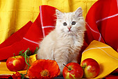 CAT 03 SJ0040 01
