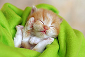 CAT 03 SJ0052 01