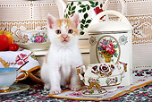 CAT 03 SJ0053 01