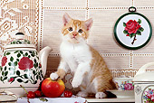 CAT 03 SJ0054 01