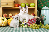 CAT 03 SJ0056 01