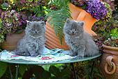 CAT 03 SJ0058 01