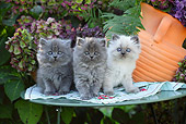 CAT 03 SJ0060 01
