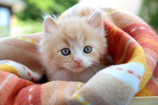 Cat 03 sj0063 01p