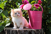 CAT 03 SJ0065 01