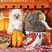 CAT 03 SJ0067 01