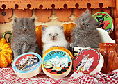 CAT 03 SJ0068 01