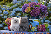 CAT 03 SJ0075 01