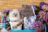 CAT 03 SJ0086 01