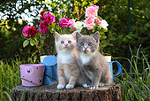 CAT 03 SJ0089 01