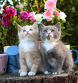 CAT 03 SJ0090 01