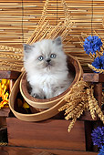 CAT 03 SJ0093 01