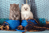 CAT 03 SJ0094 01