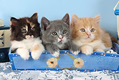 CAT 03 SJ0100 01